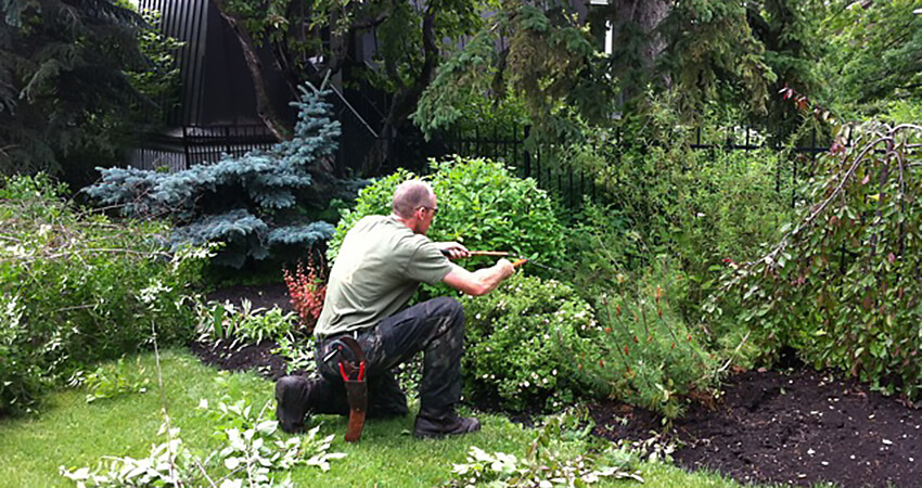 An image of an Arborest worker renovating a small section of trees