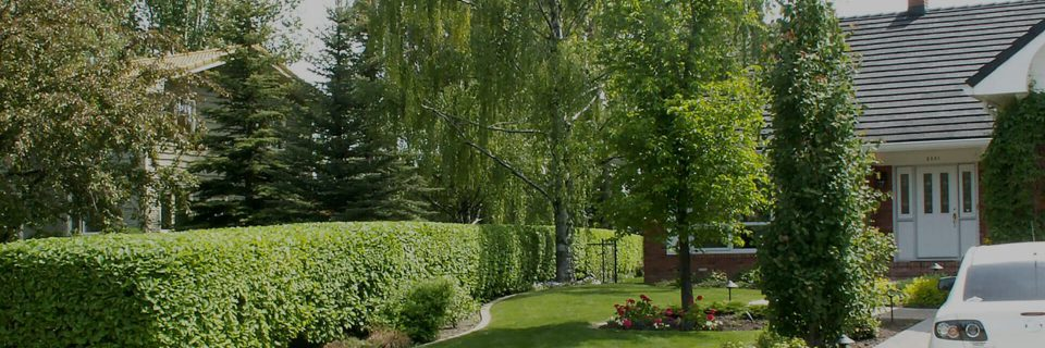 Your Complete Tree and Shrub