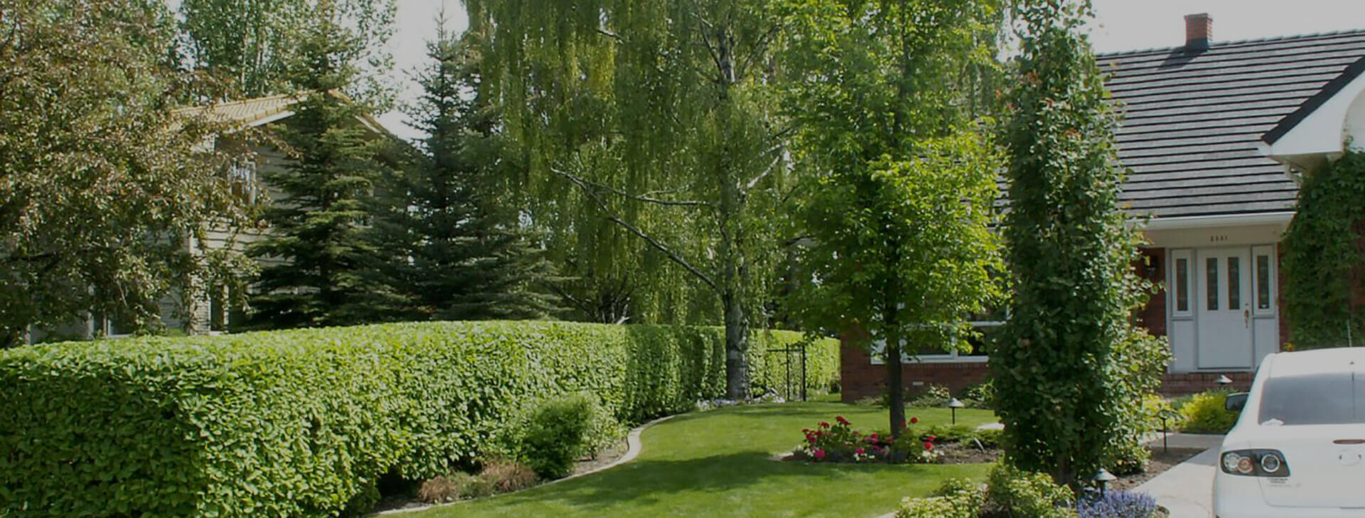 feature image of a yard serviced by The Arborest Expert Tree Service