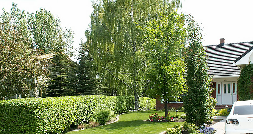 An image of a yard serviced by The Arborest Expert Tree Service