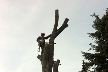 Tree Removal & Land Clearing