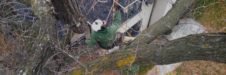 Natural Tree, Shrub and Hedge Pruning
