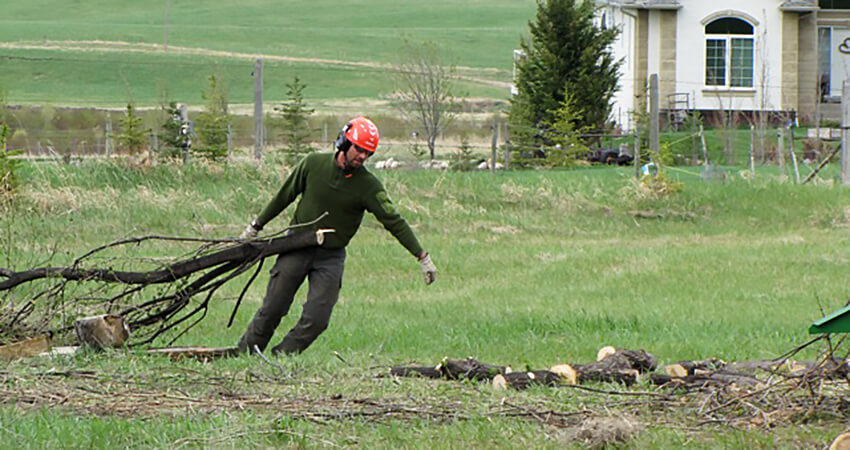 An image of an Arborest worker removing trees on a large property