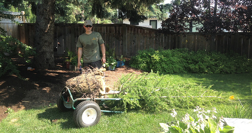 An image of an Arborest employee with a ready to plant tree