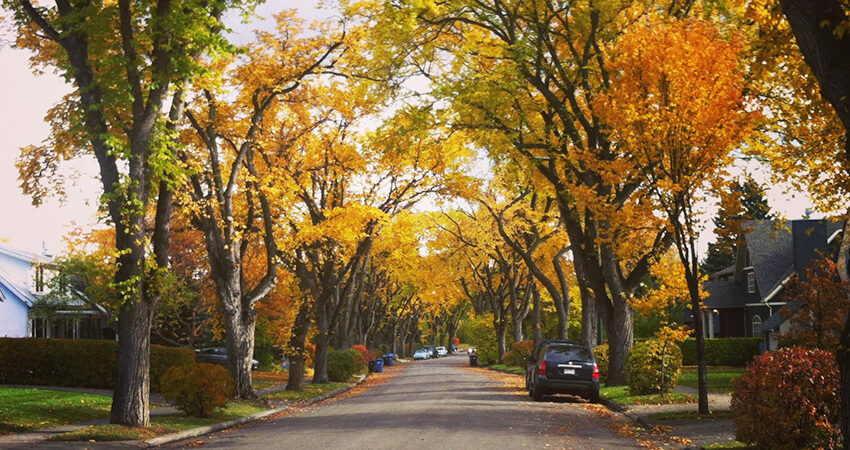 An image of a tree lined street in the fall