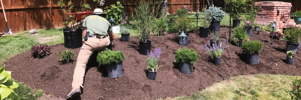 Expert Tree, Shrub and Hedge Planting